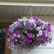Hanging Basket (1).jpg