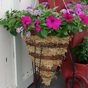 Hanging Basket (3).jpg