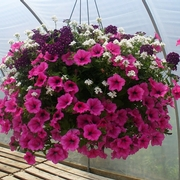 Hanging Basket (2).jpg
