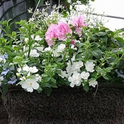 Hanging Basket (5).jpg